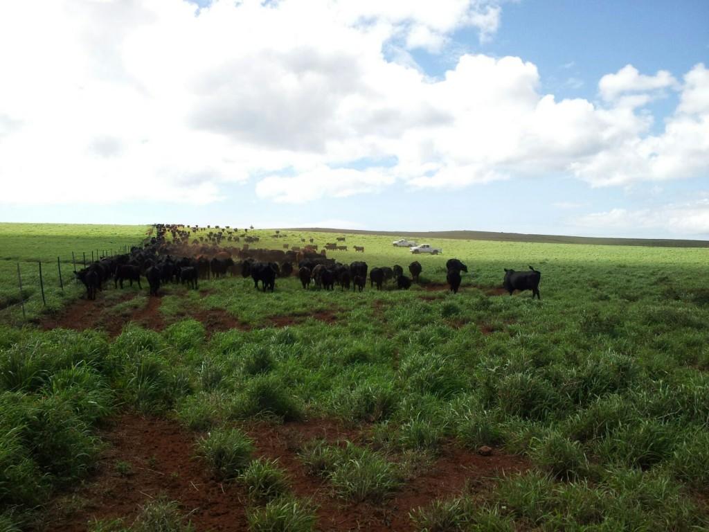 Daily Life Molokai Ranch